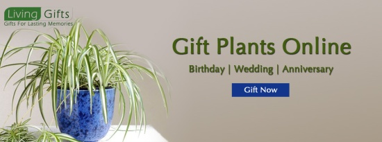 Gift-a-plant-online-in-delhi